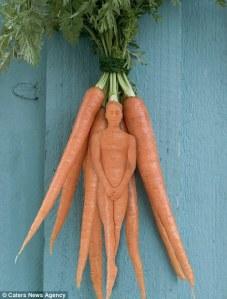 Carrot man?